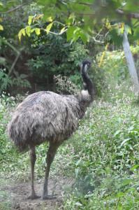 ekolott emu